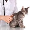 Ветеринарные клиники в Черкесске